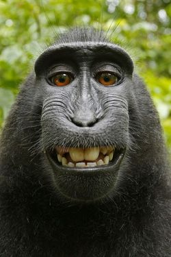 selfie-macaque_00FA000001622509